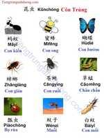 Học tiếng trung chủ đề côn trùng thường gặp