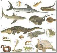Học từ vựng tiếng trung tên các loại cá