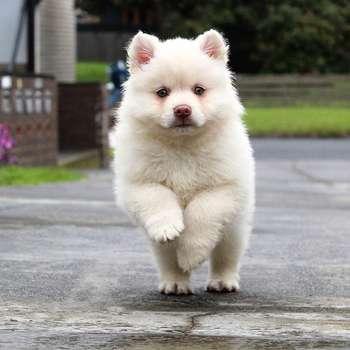 Hình ảnh con chó trong ngôn ngữ hàng ngày của người Trung Quốc