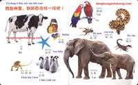 Từ vựng tiếng Trung về động vật qua hình ảnh