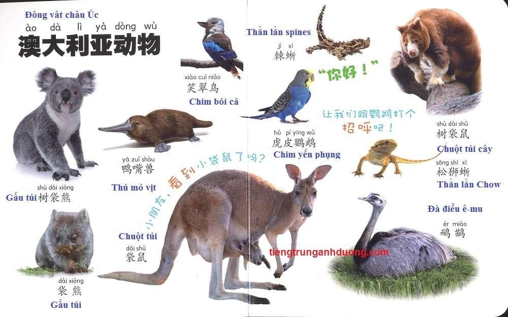 các loài vật trong tiếng Trung (11)