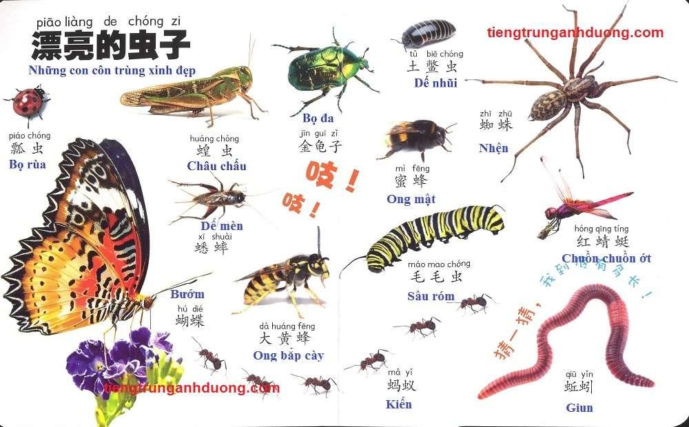 các loài vật trong tiếng Trung (2)