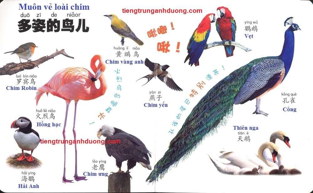 các loài vật trong tiếng Trung (3)