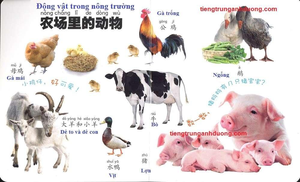 các loài vật trong tiếng Trung (4)