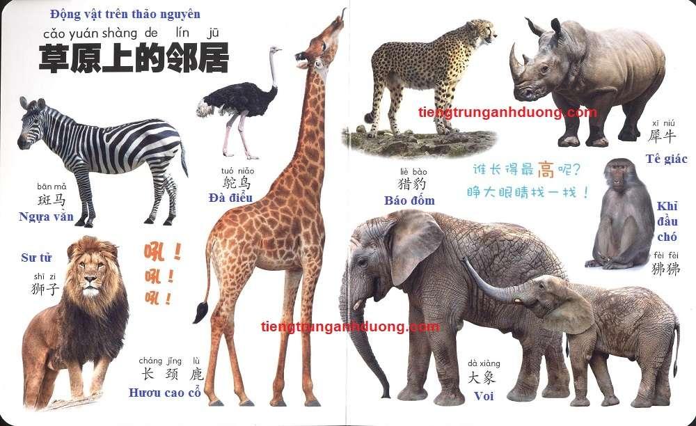 các loài vật trong tiếng Trung (5)