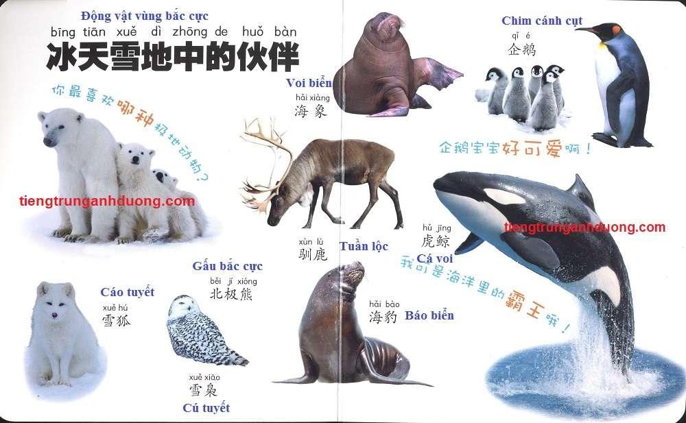 các loài vật trong tiếng Trung (7)