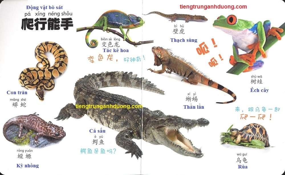 các loài vật trong tiếng Trung (8)