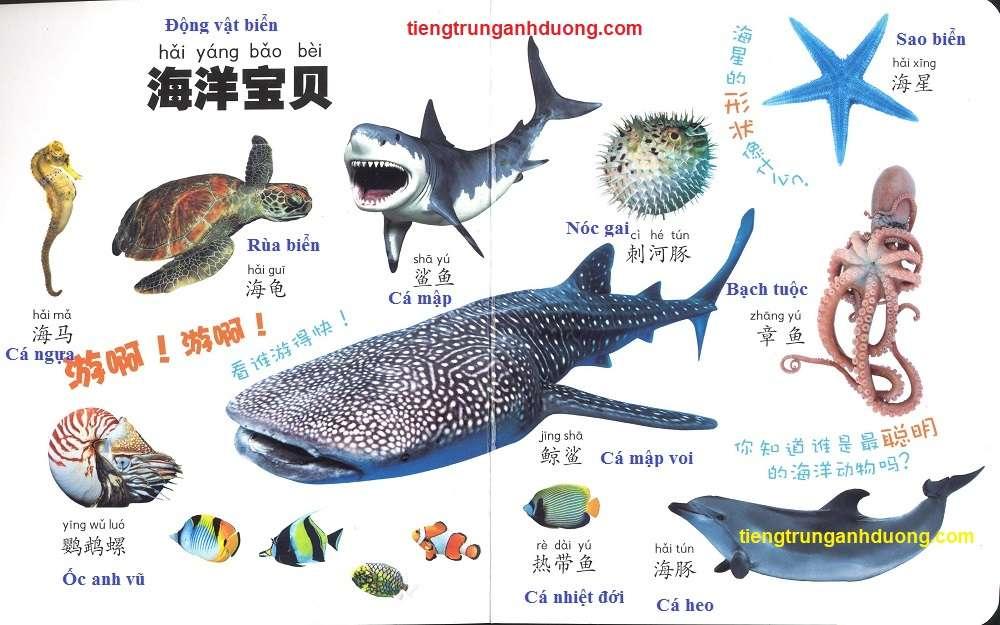các loài vật trong tiếng Trung (9)